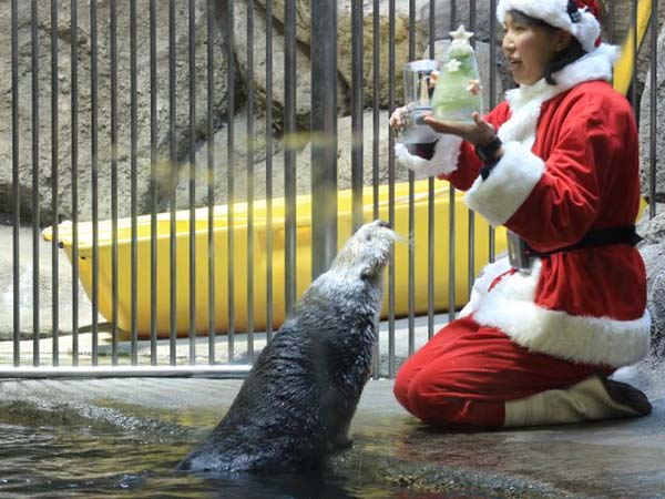 It's the Daily Otter's Christmas 2017 Mega-Post! 5