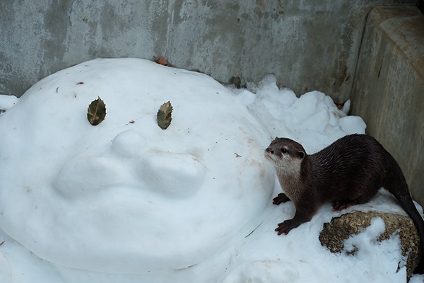 Did You Make That Snow Otter, Little Otter?