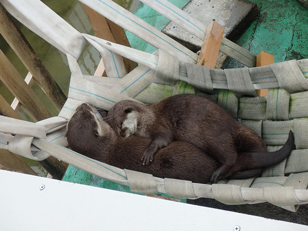 What Could Be Better Than Snuggles with a Friend in a Hammock?