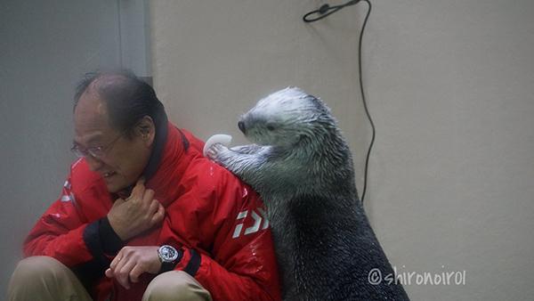 Sea Otter Gives Human an Ice Massage