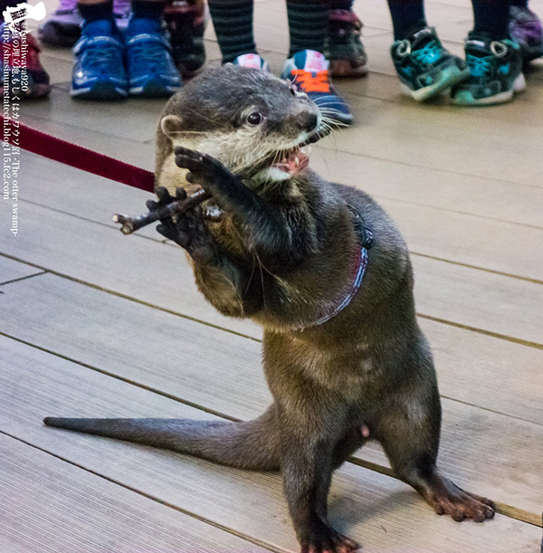 Flutist Otter Will Play You the Song of His People 1