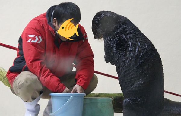 What's in the Bucket, Human? Ooh, Can I Have That Clam? 1