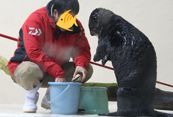 What's in the Bucket, Human? Ooh, Can I Have That Clam? 2