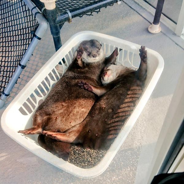 That's Not a Laundry Basket - It's an Otter Slumber Pod