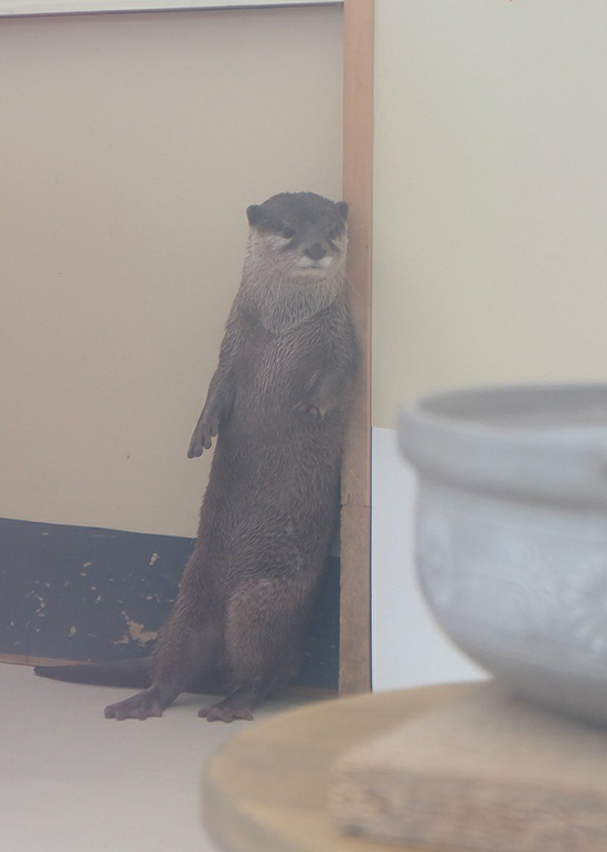 Otter Nonchalantly Leans Against the Wall