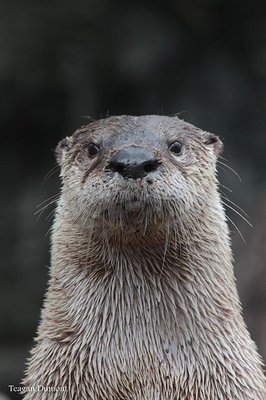 Otter Gets His Mugshot Taken