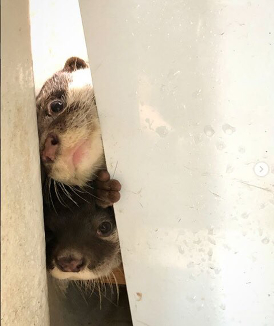 Curious Otter Pups Want to Know What's Going on in There