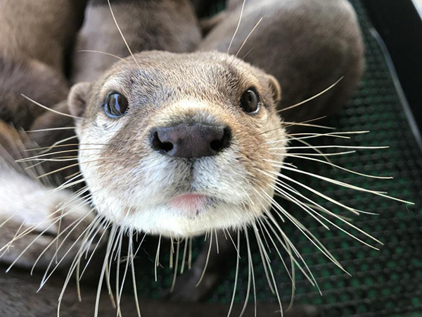 Up Close with Otter's Snoot and Whiskers
