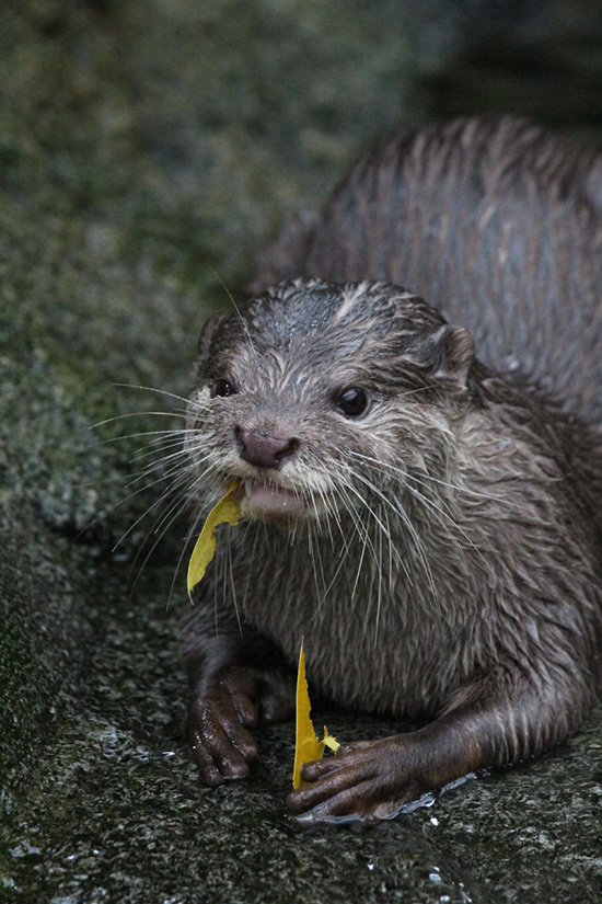 It Looks Like That Isn't as Good as You Thought It Would Be, Otter