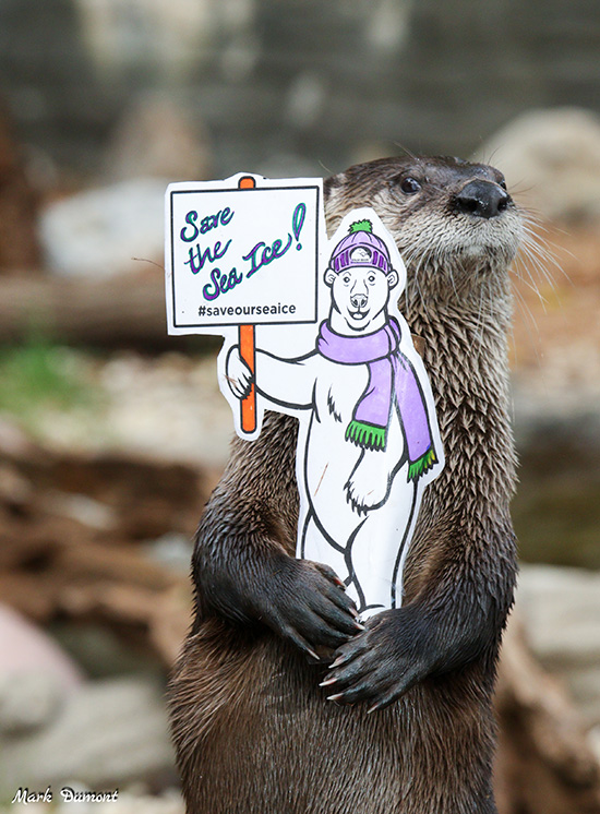 Otter Is an Environmental Activist