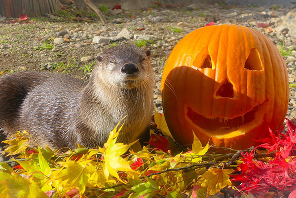 Otter Welcomes Autumn