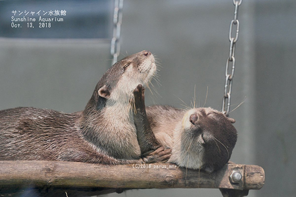 Otter Gently Caresses His Friend