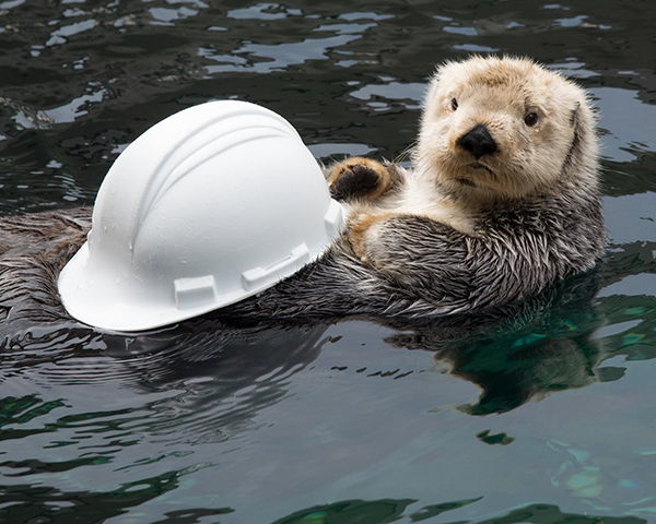This Hat Is Too Big for Me, Human. Could I Please Have Another One?