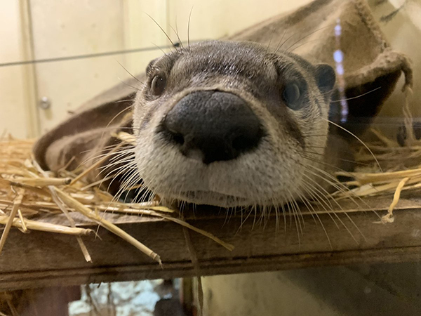 Otter, What a Big Nose You Have