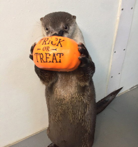 Please Deposit Seafood in Otter's Bucket — or Risk a Devilish Trick!