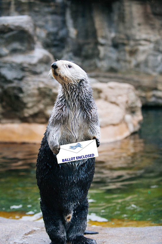 Sea Otter Oswald Is Voting Today - Are You?
