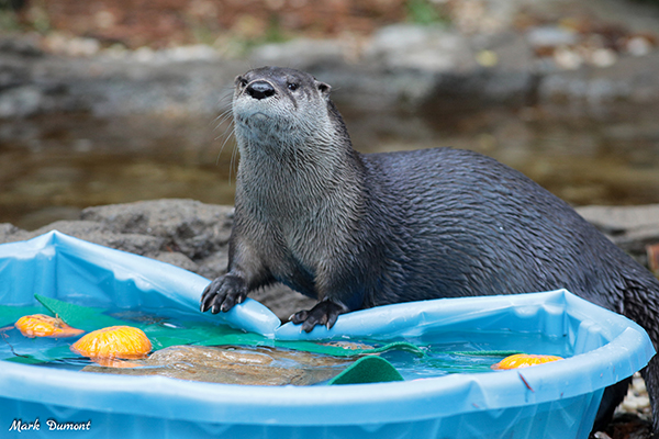 Nooo! Otter, You're Going to Let All the Water Out!