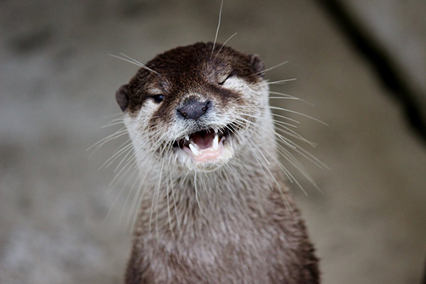 Otter, Your Wink Is a Little... Ominous