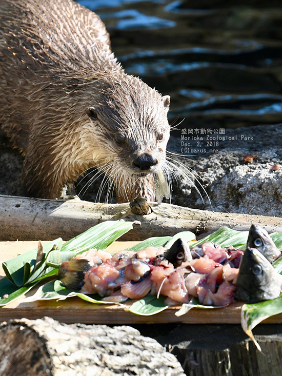 That Is Some Spread, Otter