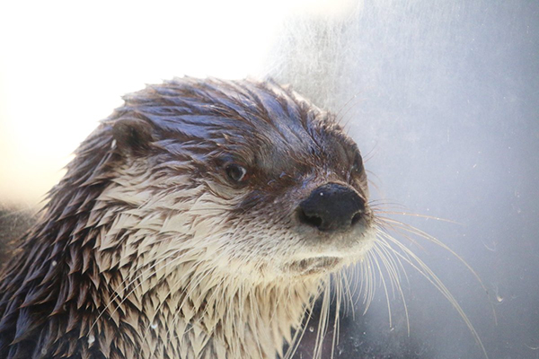 That Side Eye Makes Me a Little Nervous, Otter