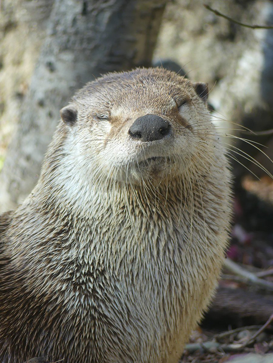 Otter Basks in the Imminent Adoration That Will Be Bestowed Upon Him Any Moment Now