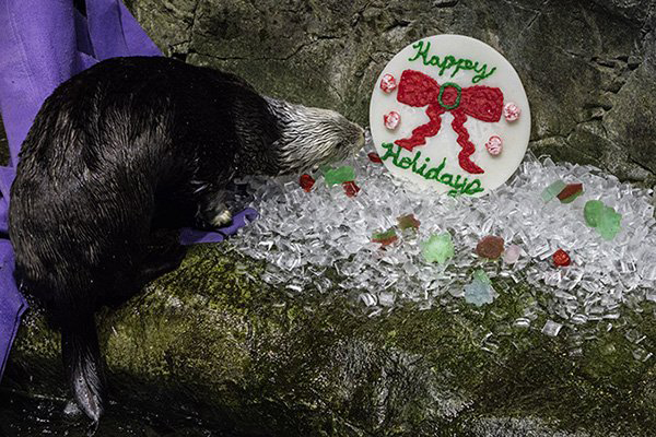 Have Otterly Happy Holidays! 1