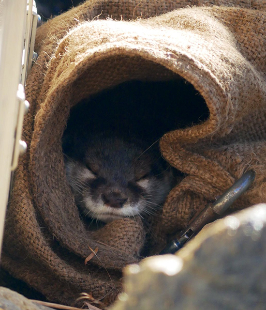 Is There Room in There for a Human, Otter?