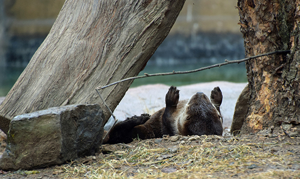 Otter Plays the Laziest Game of Limbo Ever