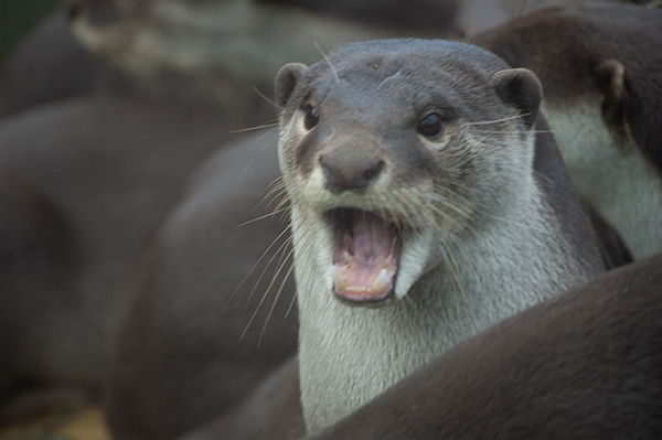 Otterly Flabbergasted