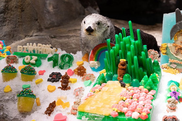 Georgia Aquarium Threw Sea Otter Oz a Birthday Party!