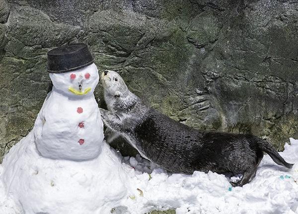 How Do You Do, Snow Human?