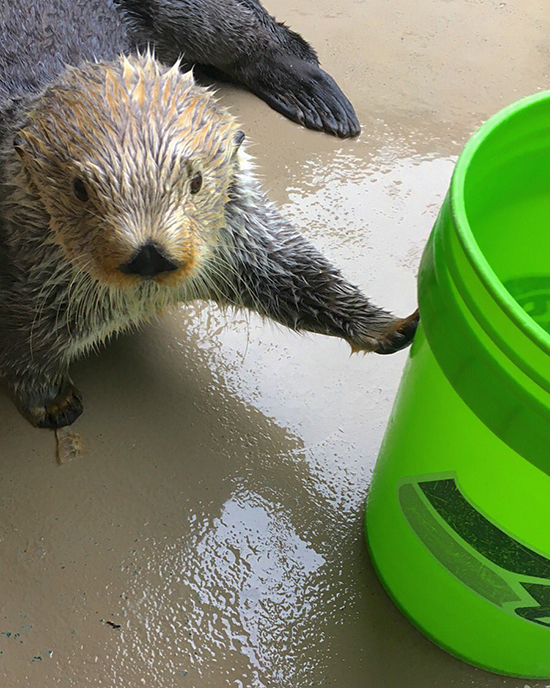 Elephant Seals Aren't the Only Ones Who Have Buckets