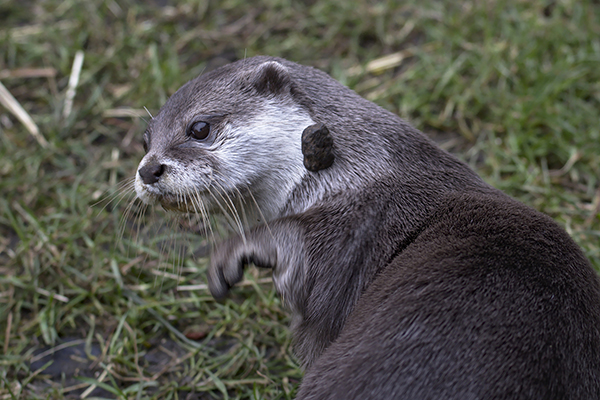 If Otter Releases This Plank His Rock Will Fall