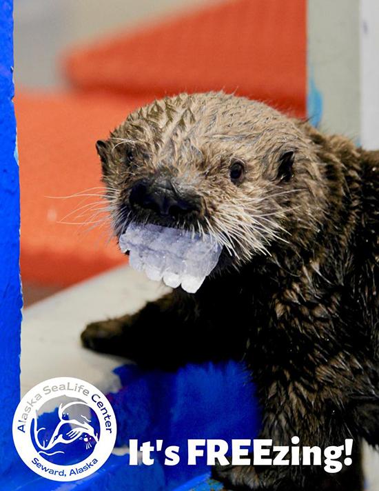 Very Discreet Dentures, Otter
