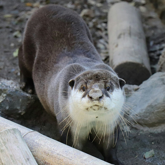 Otter's Nose Is the Perfect Size for a Smooch