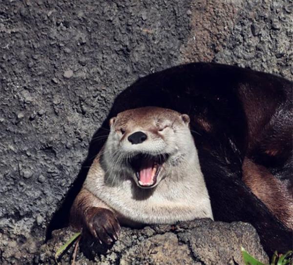 Otter Is Such a Flirt