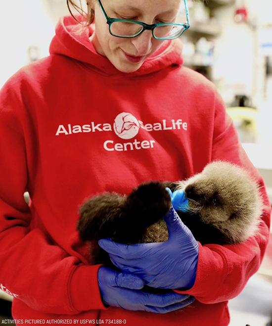 Alaska SeaLife Center Has Taken in This Tiny Sea Otter Pup