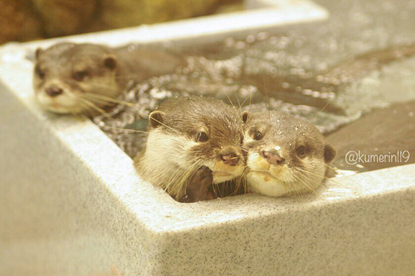 You Know, Otter, It's Not Nice to Gossip About Your Friends