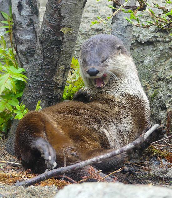 Otter Sneeze!