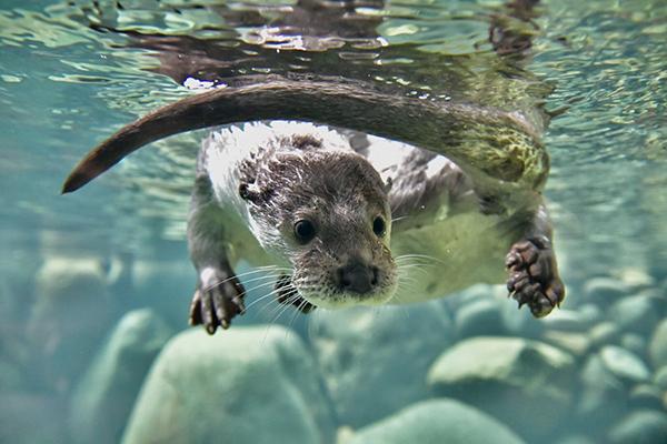 Otter Must Have Forgotten Something