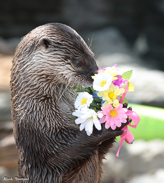 I Don't Know, Human, These Don't Smell Like Real Flowers