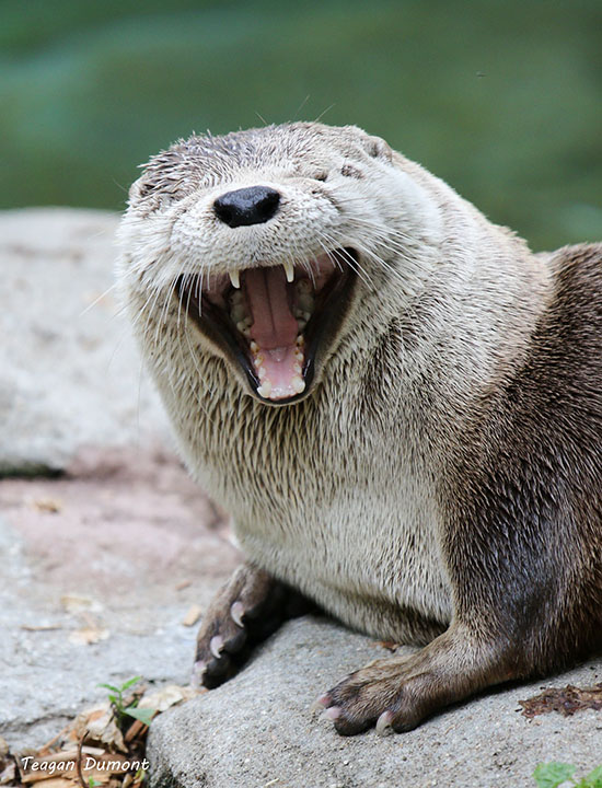 I Didn't Think My Joke Was THAT Funny, But Thanks, Otter!