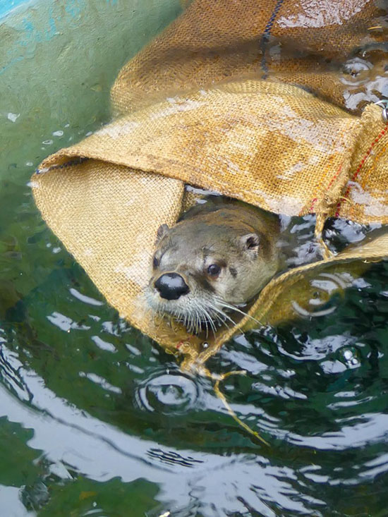 Who Knew a Burlap Sack Could Be a Fun Water Toy?