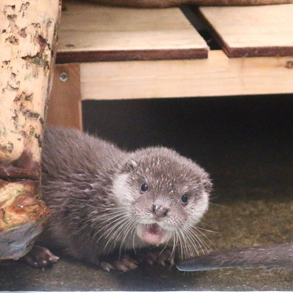 Just a Little Otter Surprise