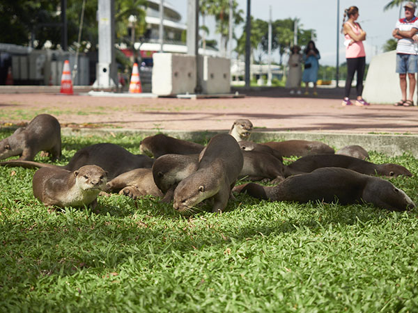 Hey! This Gathering Is for Otters Only, No Humans Allowed!