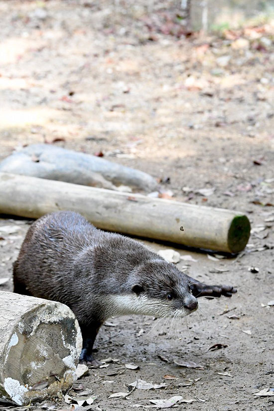 Those Single-Arm Planks Are Murder, Aren't They, Otter?