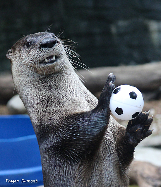 Otter Is Pumped for Today's Women's World Cup Final