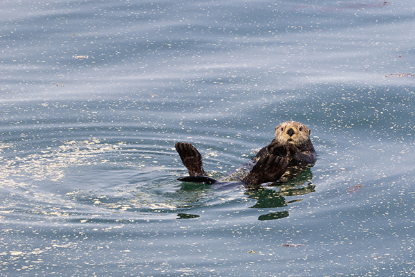 I Hope Sea Otter Isn't Allergic to All That Pollen