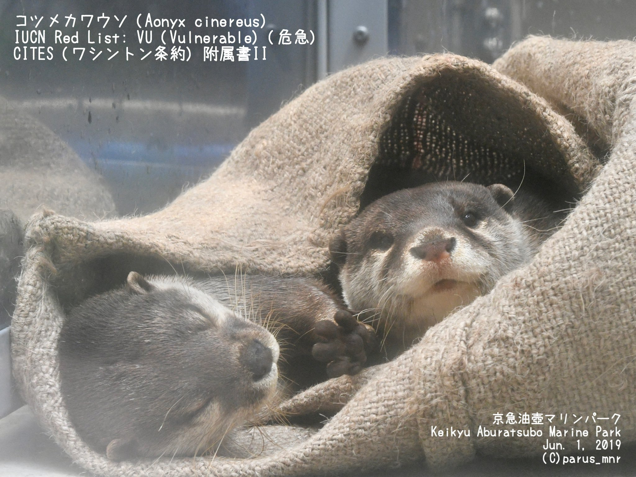 I'd Cuddle in Burlap If It Meant I Could Cuddle with an Otter