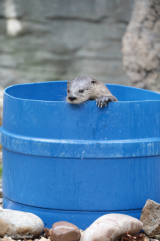 You Need a Tub Pal, Otter — I'll Get My Swimsuit!